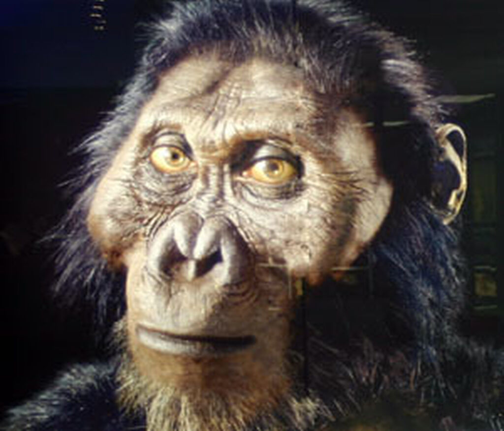 Paranthropus – Marop...