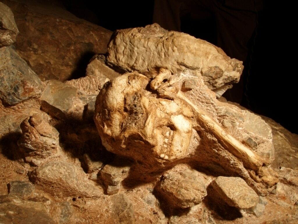 Little Foot In The Sterkfontein Cave 580 435 S 1