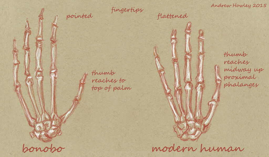 Naledi Hand Comparison Text