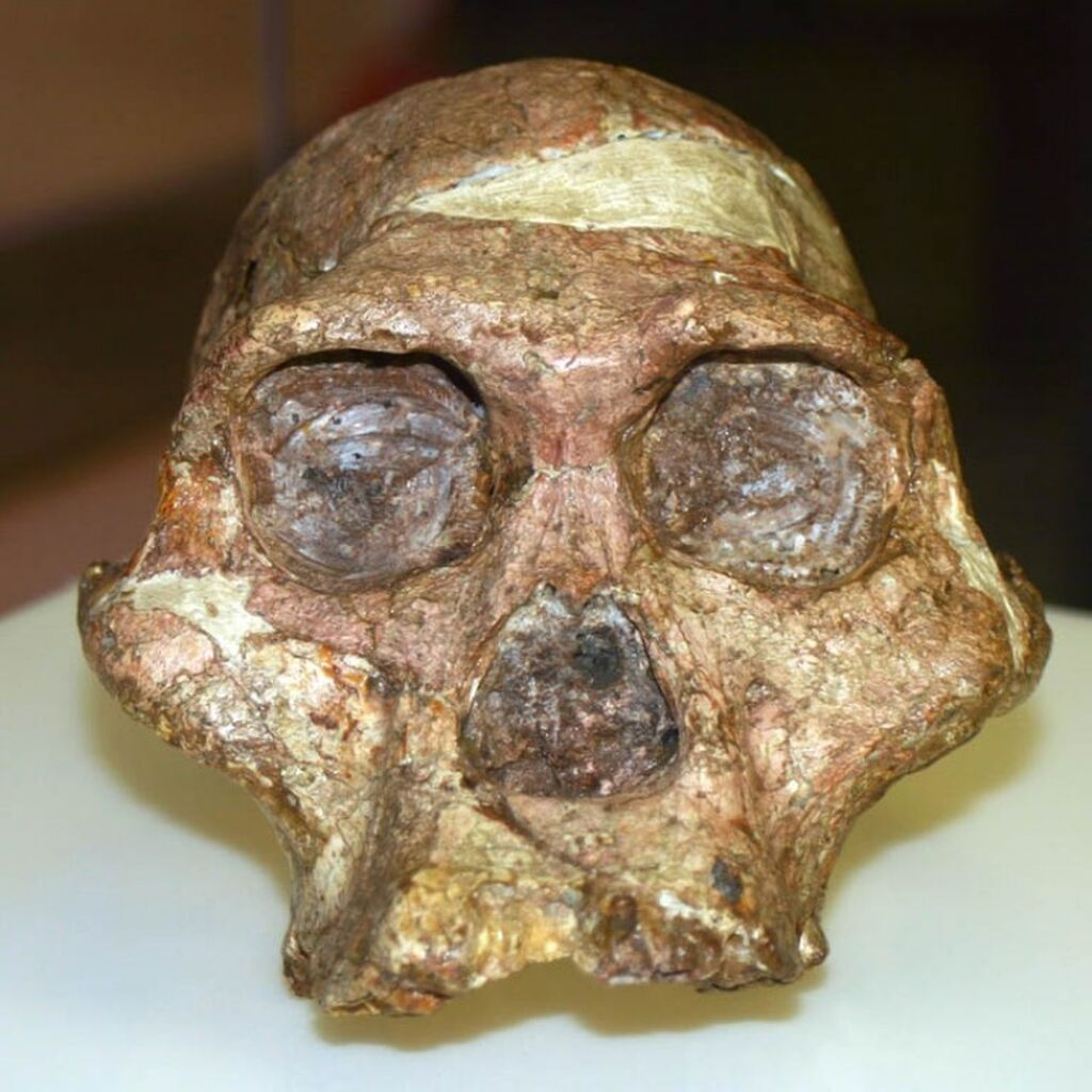 Studying fossils and extinct animals – Maropeng and