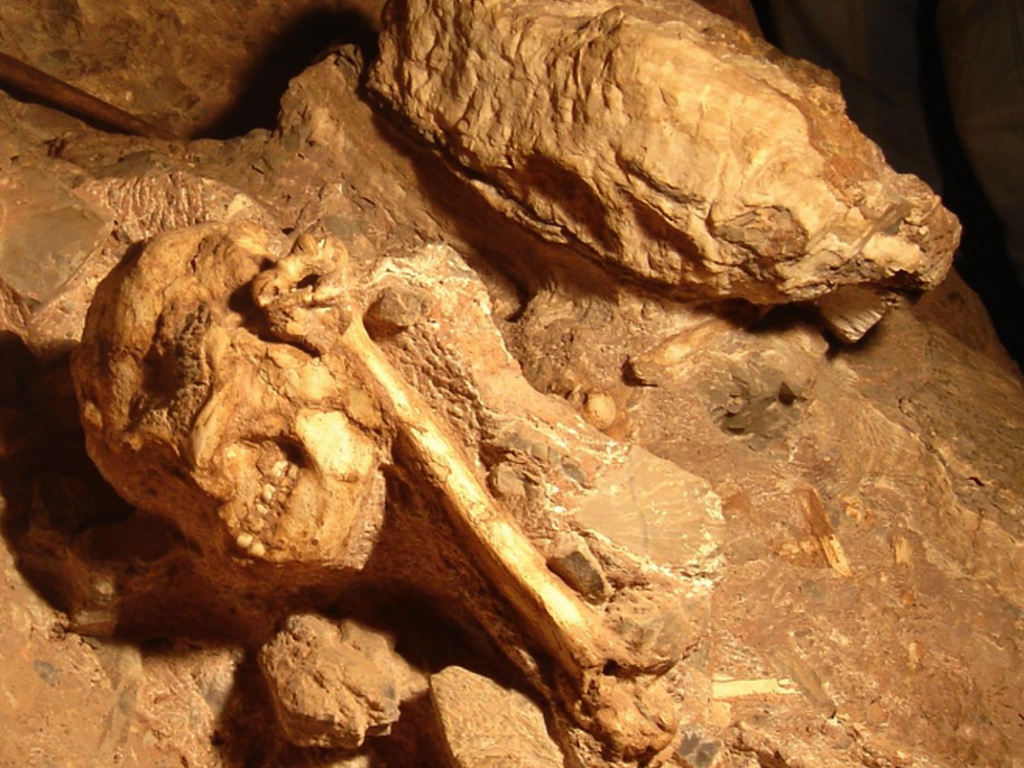 Little Foot In Cave In 2009