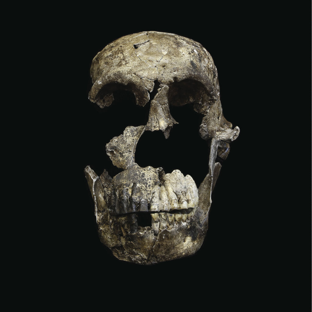 (6) Neo Skull Frontal View
