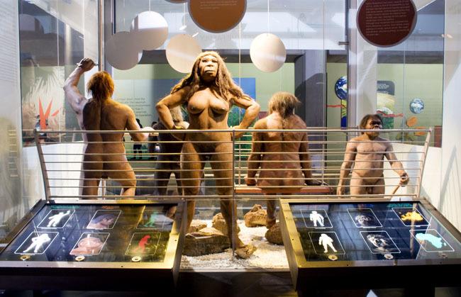 the evolution of modern humans essay