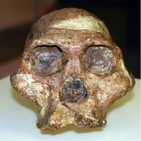 Research Paper Vs Essay Mrs Ples As The Skull Found In The Sterkfontein Area Was Nicknamed By The  Man Who Discovered It Dr Robert Boom Was Unearthed In  Essay Proposal Example also Healthy Lifestyle Essay Evolution At Maropeng  Photo Essay Of The Week  Maropeng And  Essay On High School Experience
